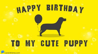 Happy Birthday to my cute puppy!